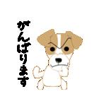 愛犬家の毎日スタンプジャックラッセルcute(個別スタンプ:08)