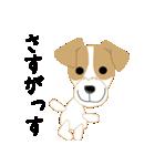 愛犬家の毎日スタンプジャックラッセルcute(個別スタンプ:15)