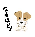 愛犬家の毎日スタンプジャックラッセルcute(個別スタンプ:23)