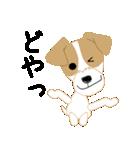 愛犬家の毎日スタンプジャックラッセルcute(個別スタンプ:32)