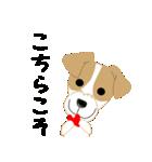 愛犬家の毎日スタンプジャックラッセルcute(個別スタンプ:36)