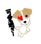愛犬家の毎日スタンプジャックラッセルcute(個別スタンプ:38)