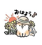 ほんわかしばいぬの夏(個別スタンプ:01)