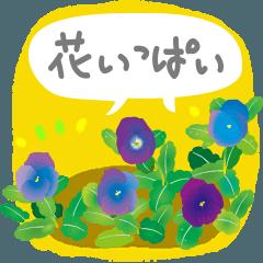 可愛い花のメッセージ !今 花盛り!