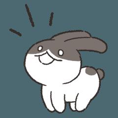 可愛いウサギ & ビション