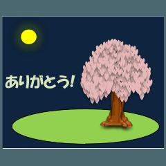 桜そして夜/お返事