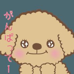 トイプードルですもの日常会話編〜茶色系〜