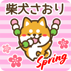 柴犬さおりの春