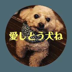博多弁U^ェ^U愛しとう犬