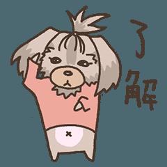 垂れ耳ヨーキーのうめ子ちゃん【日常】