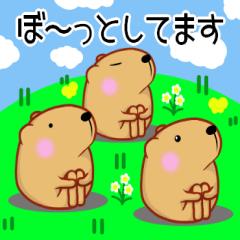 きゃぴばら【春】