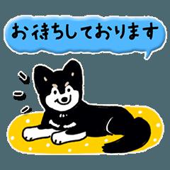 Every Day Dog 黒のポメラニアン