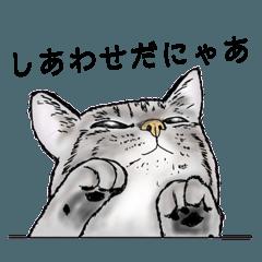 猫たちのHappy Life