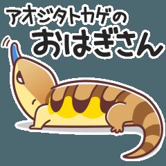 アオジタトカゲのおはぎさん