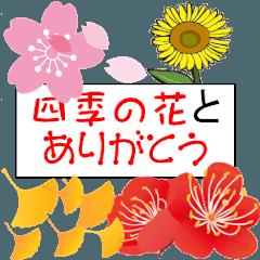 四季の花とありがとう