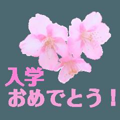 桜の季節(お祝い・お礼・お花見♡)