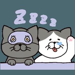 猫のトミとヤノ