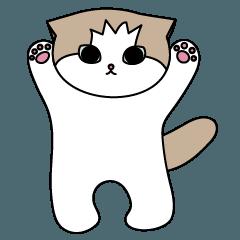 かわいい子猫ROSY(ロッジ)