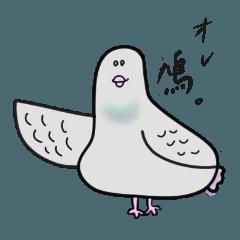 オレ、鳩!