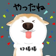 かわいい柴犬4(中国語付き)