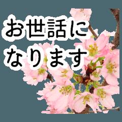 暮らしに花を♪桜(敬語)