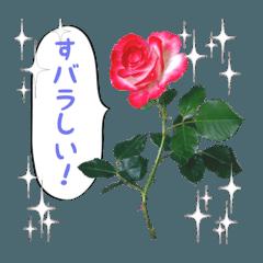 花de気持ち・使えるダジャレ編