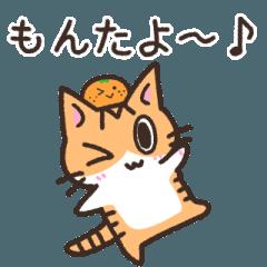 伊予弁ねこ(方言シリーズ)