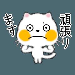 [LINEスタンプ] 白ネコちゃんです。敬語です。