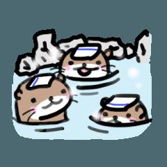 コツメ3兄弟