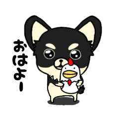 愛しのチワワ【ブラックタン】
