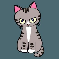 猫のゴンです。
