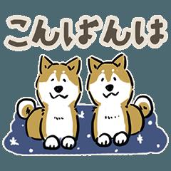 Every Day Dog SHIBA 日本語3
