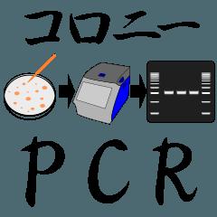 コロニー PCR法 スタンプ