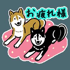 しば犬と黒柴