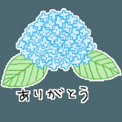 6月★紫陽花~鎌倉の旅行~