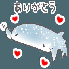 シンプル サメ 日常会話 敬語
