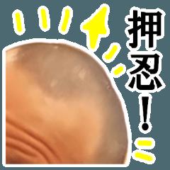 【実写】坊主頭~五厘刈り~