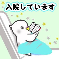 Snowちゃん病院へ行く3