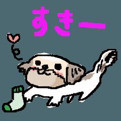 シーズーのきょんちゃん