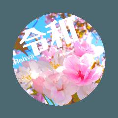cherry blossom  japan10 ♡ (平成→令和)