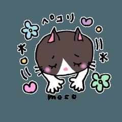 はちわれネコ  mocoちゃん