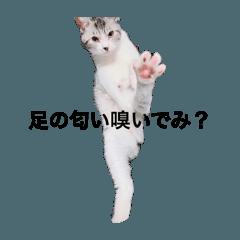 猫好きな人のスタンプ