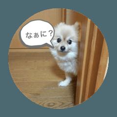 愛犬ラスちゃん