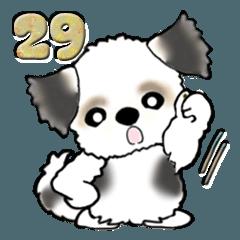 【大きめ文字】シーズー犬(日常使う言葉)29
