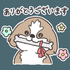 ほんわかシーズー犬の日常<敬語>