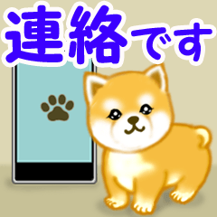 [LINEスタンプ] ちび秋田犬 連絡の画像(メイン)