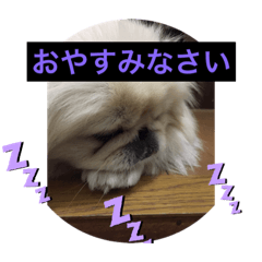 mokoスタンプ愛犬moko