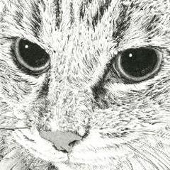 山田猫:令和日本語表現 犬も vol.10