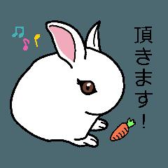 家のウサギさん