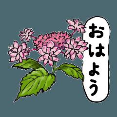 かわいいお庭の花